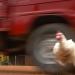 Hühnerwahnsinn - Vom Unsinn des globalen Handelns