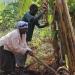 Arbeiten DR Kongo