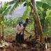 Nakatya und ihr Mann Bagalwa bei der Feldarbeit, DR Kongo